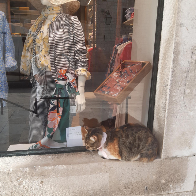 Maca s modernom maramom odmara za izlogu na Stradunu
