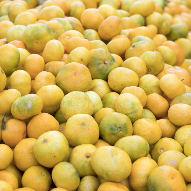 Mandarina je još uvijek vodeća voćna vrsta u Hrvatsko