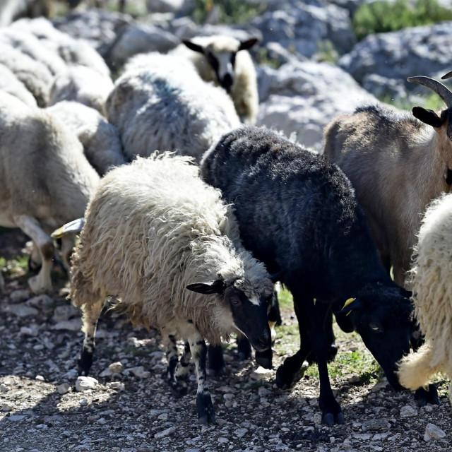 Programi s vunom održavat će se ponedjeljkom i srijedom prijepodne