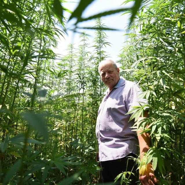 Na poljoprivrednom gospodarstvu u Smilčiću posijani su prvi hektari industrijske konoplje i to na površini od 17 hektara. Pilot program odvija se u suradnju s AGRRA-om Zadarske županije. Jedan od vlasnika plantaže je Goran Perović Mungos