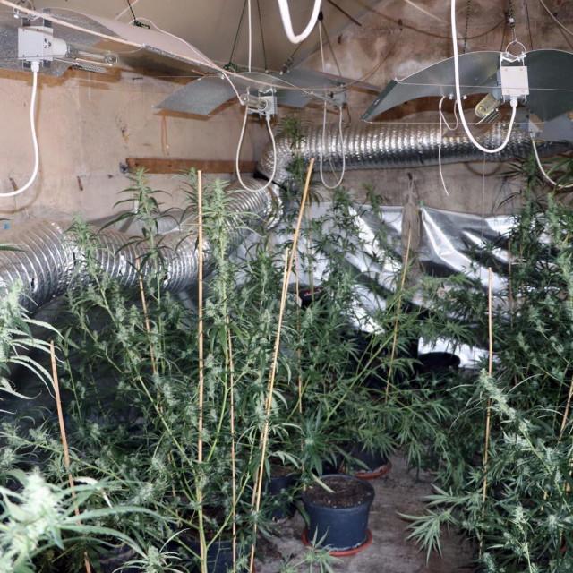 36-godišnjak iz Konavala u kući uzgajao drogu i skladištio oružje