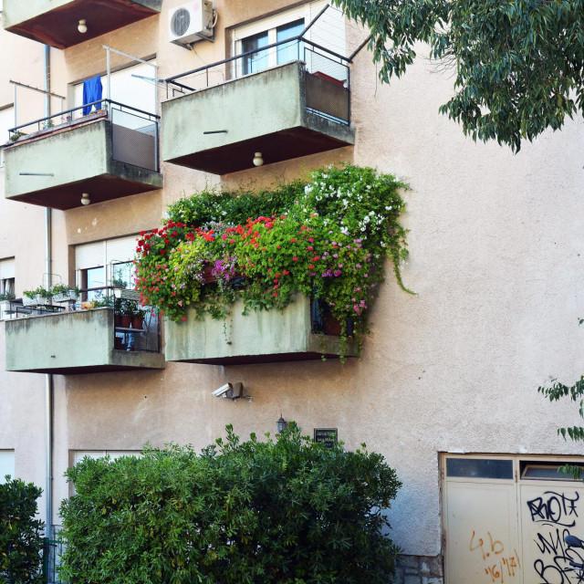Rascvjetali balkon gopođe Deane Konjuh na Putu Gimnazije