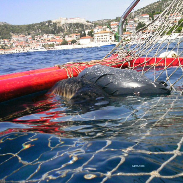 Jedna od usmrćenih životinja doplutala je u vaterpolski gol