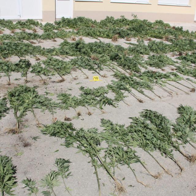 Marihuana pronađena u Suhaču