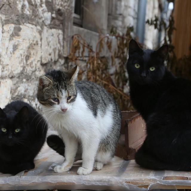 mačke lutalice posvađale su stanare jednog kvarta na Poluotoku