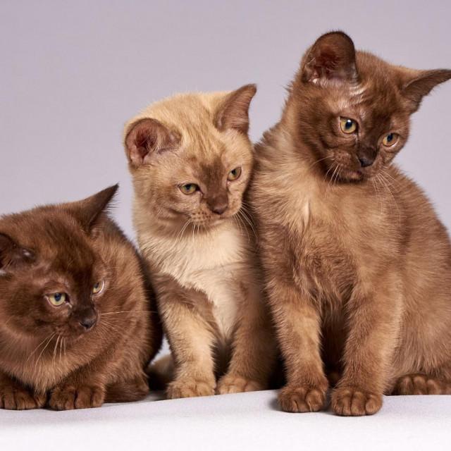 Sterilizirano više od tisuću uličnih mačaka