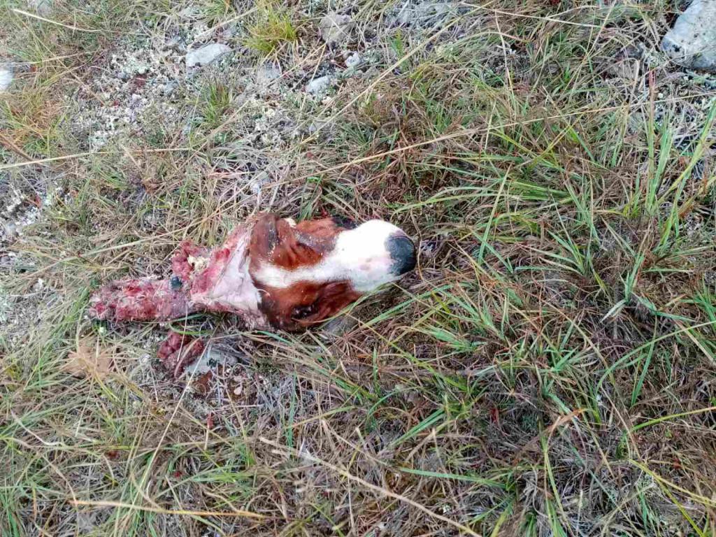Tužni ostatak perspektivne lovačke kuje<br />