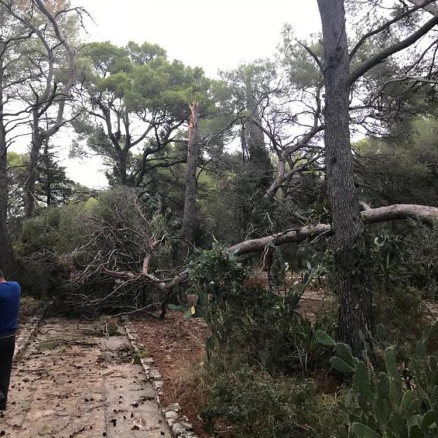 Uništen je veliki dio jednog od najljepših privatnih botaničkih vrtova u Hrvatskoj<br />