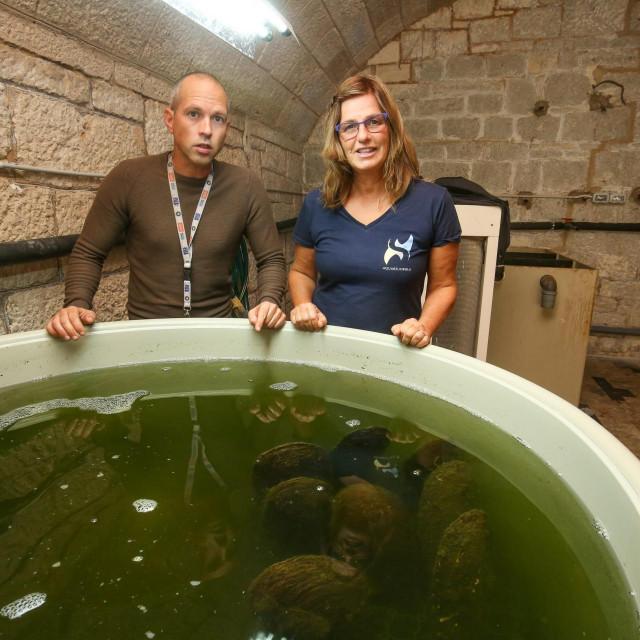 Pula, 011020.<br /> U pulskom akvariju perisle skoljke koje su izuzete iz mora odrzavaju se na zivotu u posebnim uvjetima.<br /> Na fotografiji: Milena Micic i Neven Ivesa nad bazenom s periskama u kojem se hladi voda.<br />