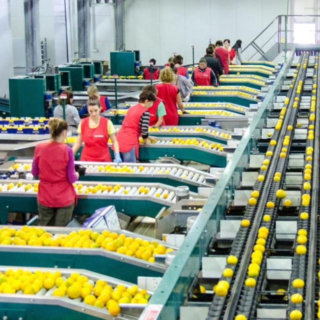 Otkupni centar tvrtke ENNA Fruit je krenuo s otkupnom cijenom od četiri kune za prvu i dvije i pol za drugu klasu mandarine. Nakon tjedan dana cijena je korigirana na 3,5 kuna za prvu klasu