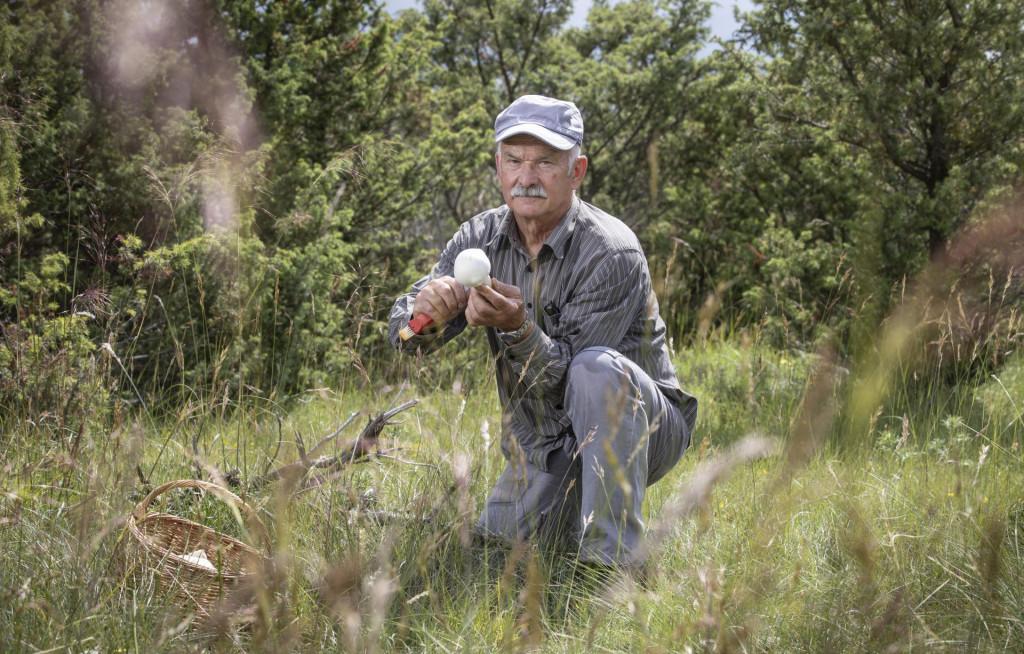 Gljivar Josip Budinski u sakupljanju gljiva u okolici Sinja