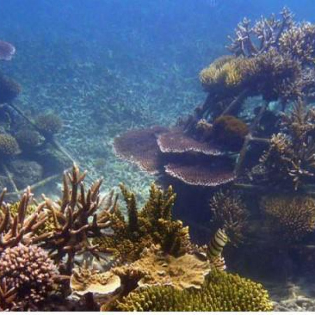 Podvodni bi greben u zadarskom akvatoriju služio zaproučavanje mogućih učinaka novog staništa na očuvanje riba, školjkaša i ostalih morskih organizama koji su izloženi antropogenom pritisku