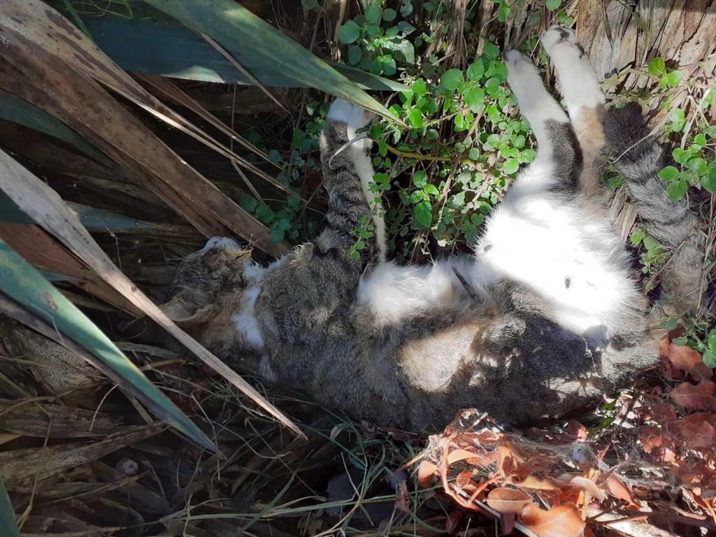 Otrovane mačke u Mokošici