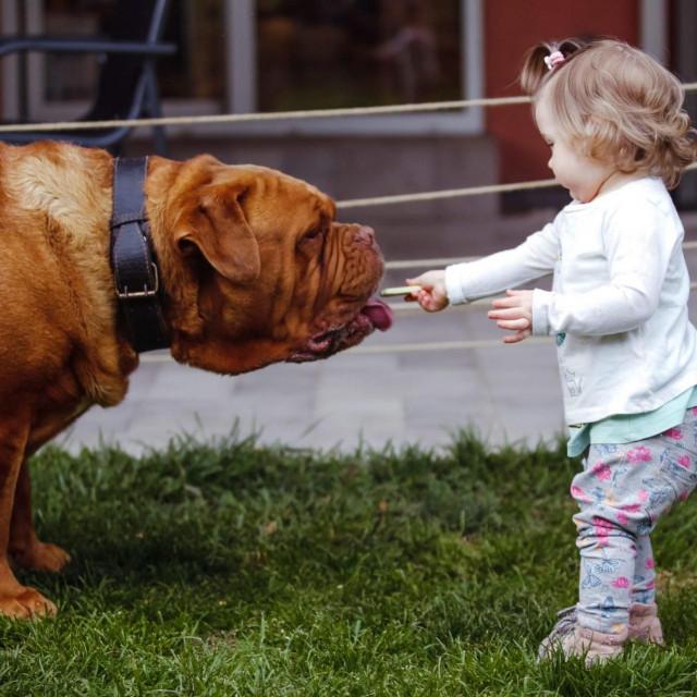 Ovaj mastif se bezopasno druži s djecom, ali ti psi mogu i nekontrolirano napasti