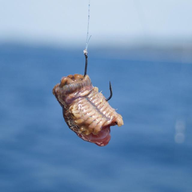 Dobro se drži i nakon brojnih napada ribica