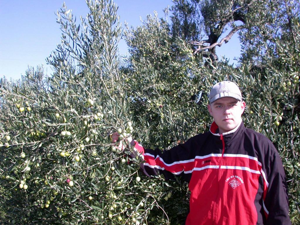 Mili Drinković kod stabla masline za čije su mu obrezivanje potrebna dva dana<br />