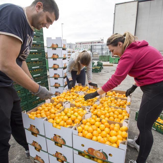 Tvrtka'Karlo promet' iz Metkovića u vlastitom je aranžmanu donirala sedam tona mandarina dječjoj bolnici i domovima za nezbrinutu djecu