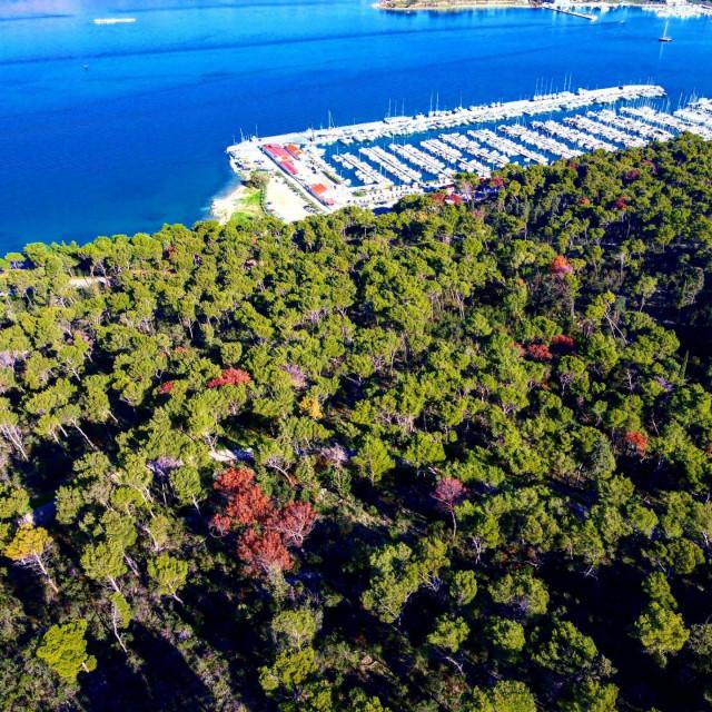 Crvena stabla na Marjanu u studenom 2020.