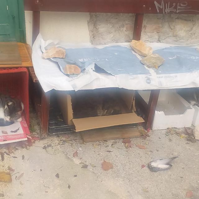 Mace su napokon dobile svoju kućicu...