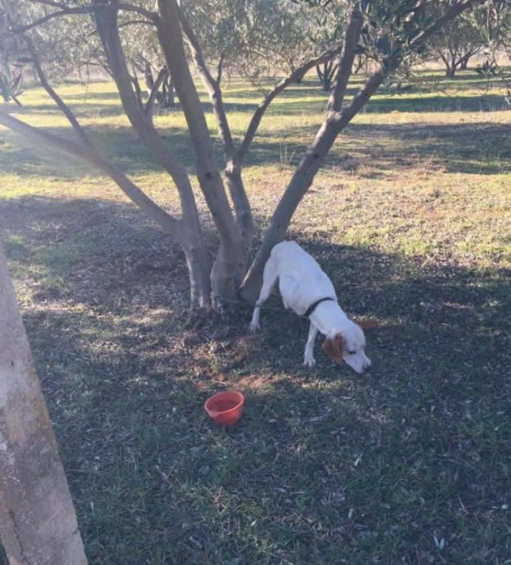 Pas kojeg su pronašle volonterke azila