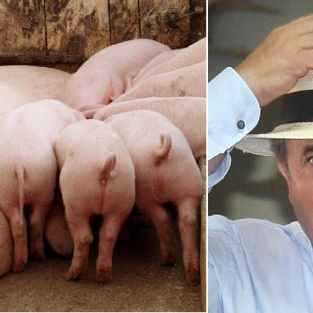 Oglas za javnu dražbu svinjogojske farme Miočić-Siverić po početnoj cijeni od 9,1 milijuna kuna objavljen je prvo na Njuškalu