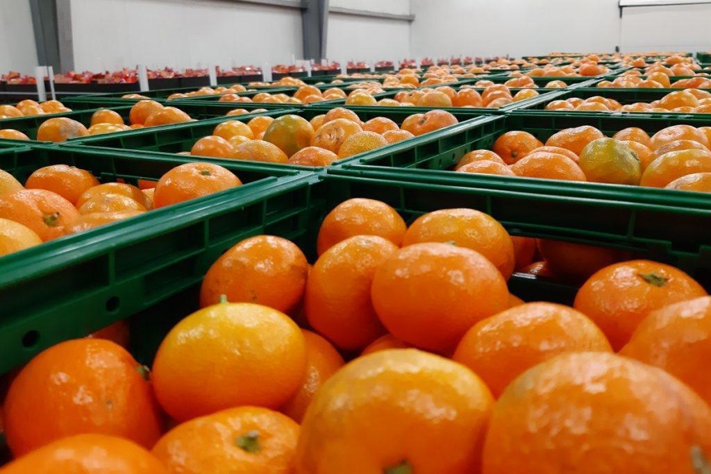 Dubrovačko-neretvanska županija tradicionalno daruje mandarine prijateljskoj Vukovarsko-srijemskoj županiji