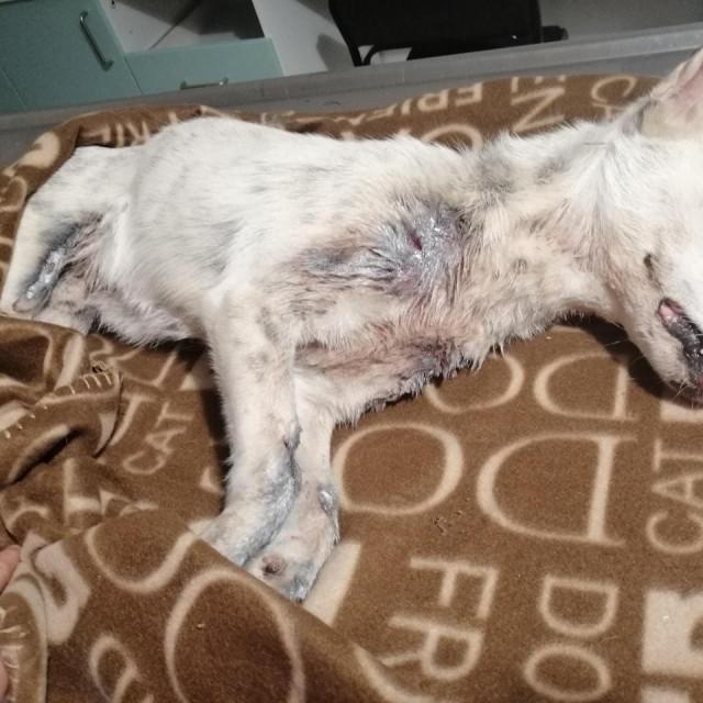 Maleni pas je preživio, a njegova sudbina na noge je digla brojne građane