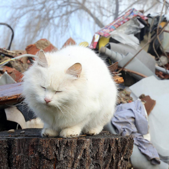 Maca ispred kuće koja je ostala sravnjena sa zemljom u Majskim Poljanama