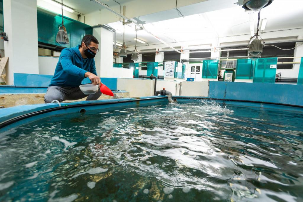 Josip Maleš hrani ribu u bazenima