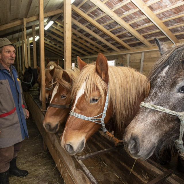 Vlado Panezić kod svojih konja u selu Slana nedaleko od Petrinje