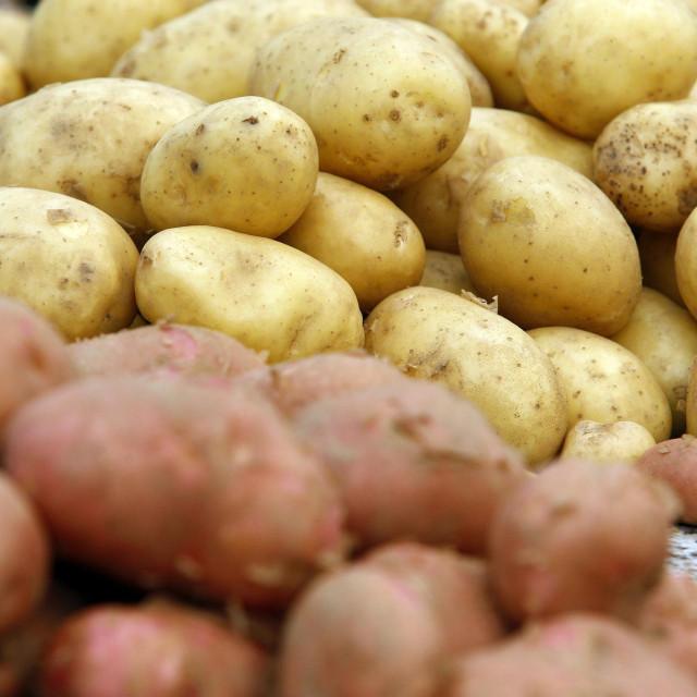Varazdin, 010715<br /> Varazdinska trznica poznata je po tome da velika vecina trgovaca prodaje voce i povrce iz domaceg uzgoja za sto imaju certifikate koje izdaje trznica, tako da kupci mogu biti sigurni u kvalitetu proizvoda. Ovih je dana sve veca ponuda raznog voca i povrca, ali trgovci se zale da je prodaja slaba.<br /> Na fotografiji: mladi krumpir.<br />