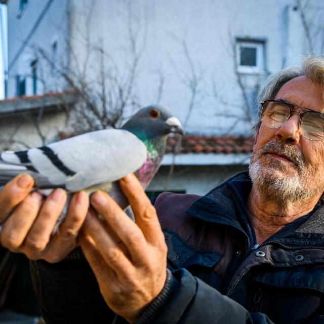 Vodičanin Borodin Kolar uzgaja golubove pismonoše