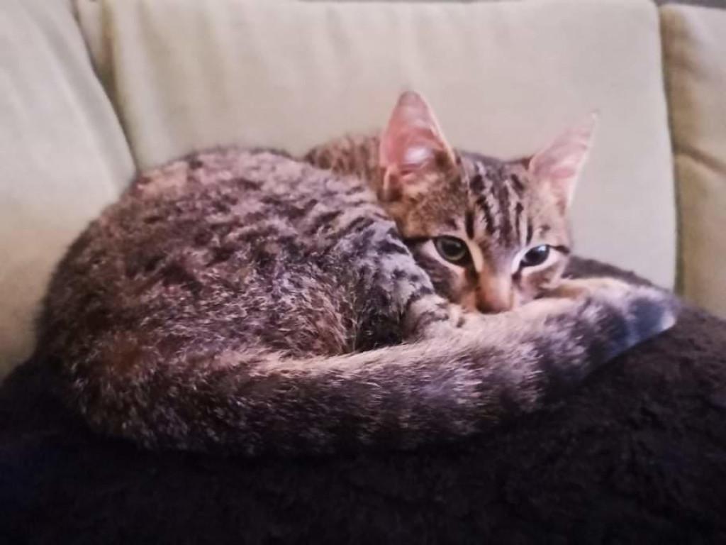 Mačak Zus žrtva je odvratnog čina, zasad je dobro