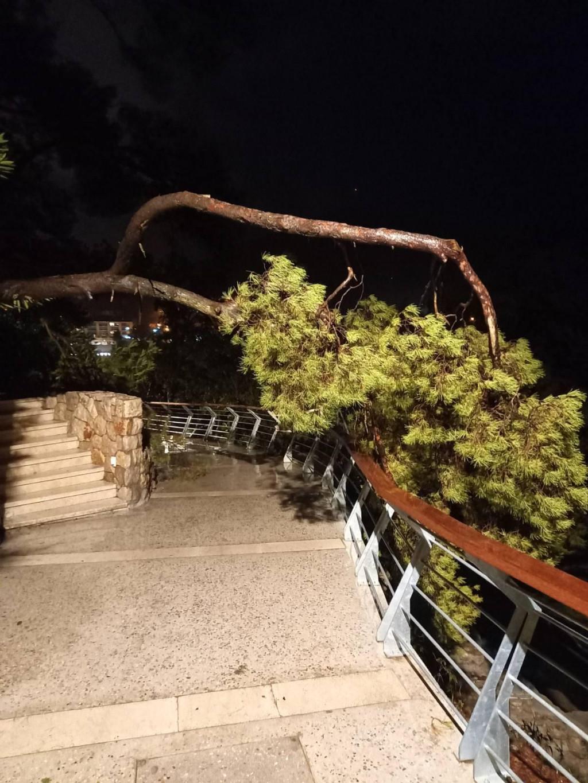 Srušio se veliki bor na šetnici u Uvali Lapad