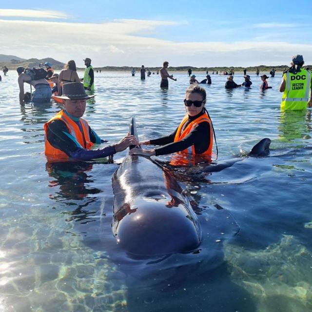 Spašavanje kitova na Novom Zelandu
