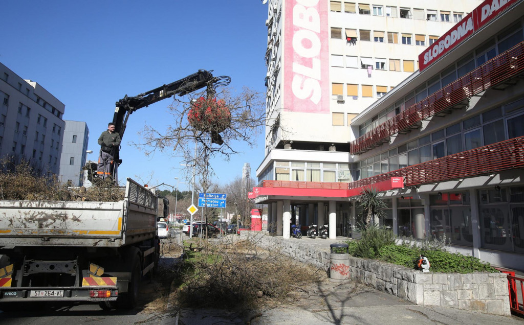 Radnici Parkova i nasada uklonili su nekoliko nekoliko starih stabala sofora na čija će mjesta posaditi sedam mladih koštela visokih šest metara