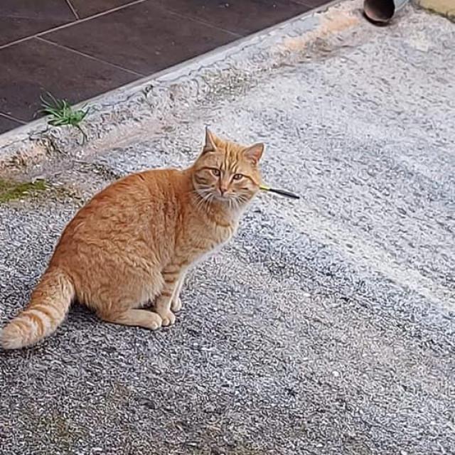 Prostrijeljene mačke u Sukošanu