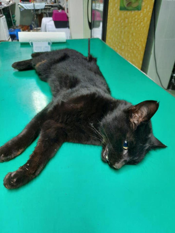 Mačka pogođena samostrelom u Sukošanu