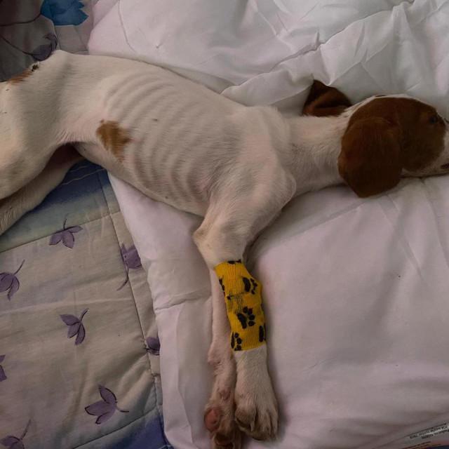 Ponovo slučaj zlostavljanja psa na zadarskom području