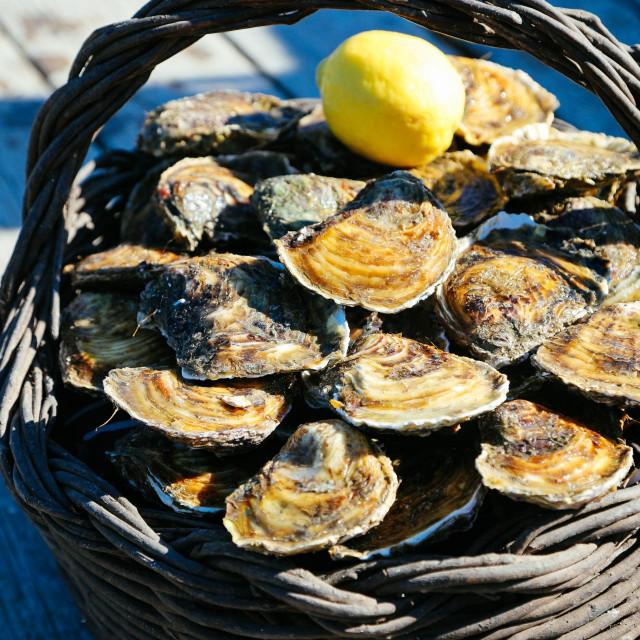 <br /> Najpoznatiji hrvatski prirodni afrodizijak: malostonske kamenice