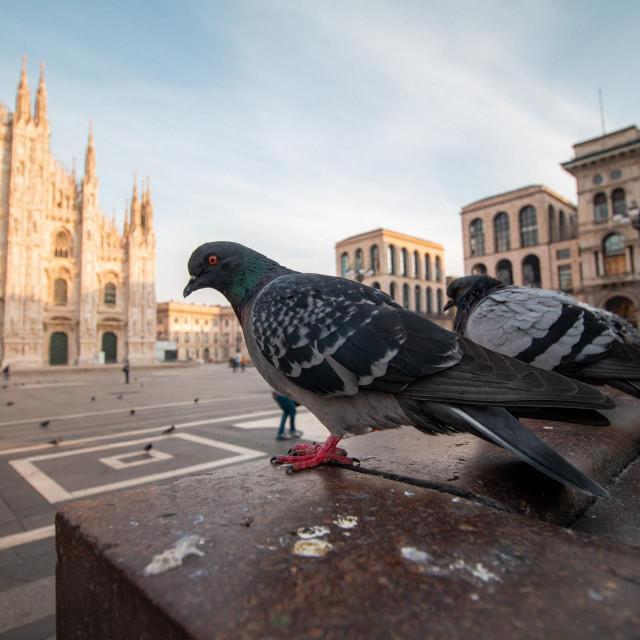 Piazza Del Duomo i novi lockdown