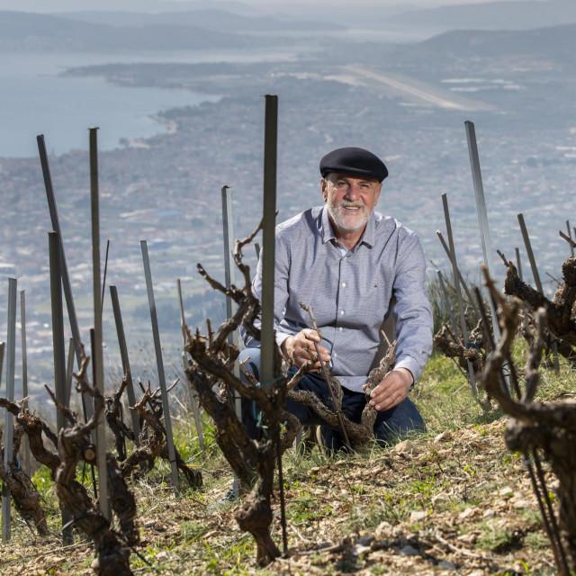 Jakša Bedalov u svome vinogradu crljenka na južnim padinama Kozjaka, na više od 400 metara nadmorske visine