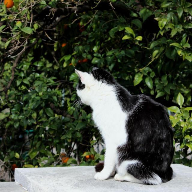 Od rujna 2018. godine na administrativnom području Grada Dubrovnika sterilizirana je ukupno 1031 mačka