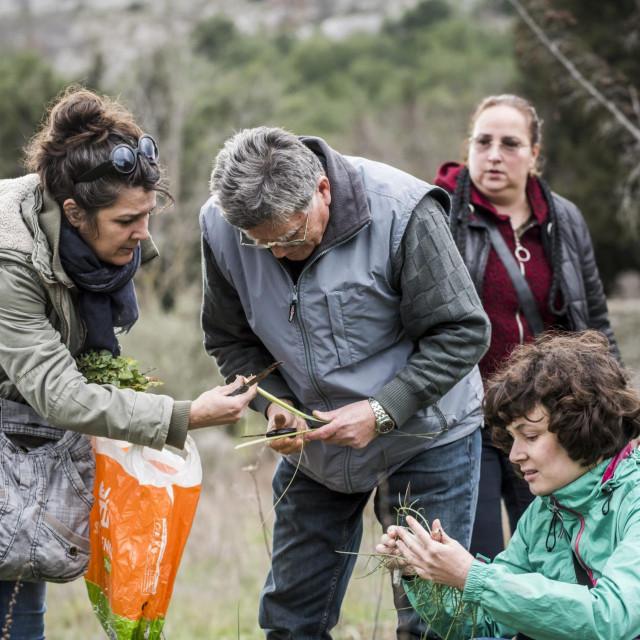 Martina Tabula objašnjava beračima kako se ove trave zovu