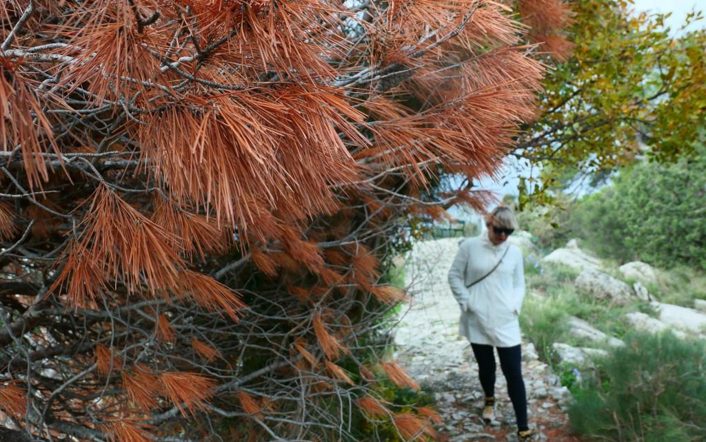 Potkornjak će se uskoro opet probuditi, a Hrvatske šume, tvrde u gradskoj upravi, nikako da krenu s preostalim radovima na sanaciji Park-šume Marjan
