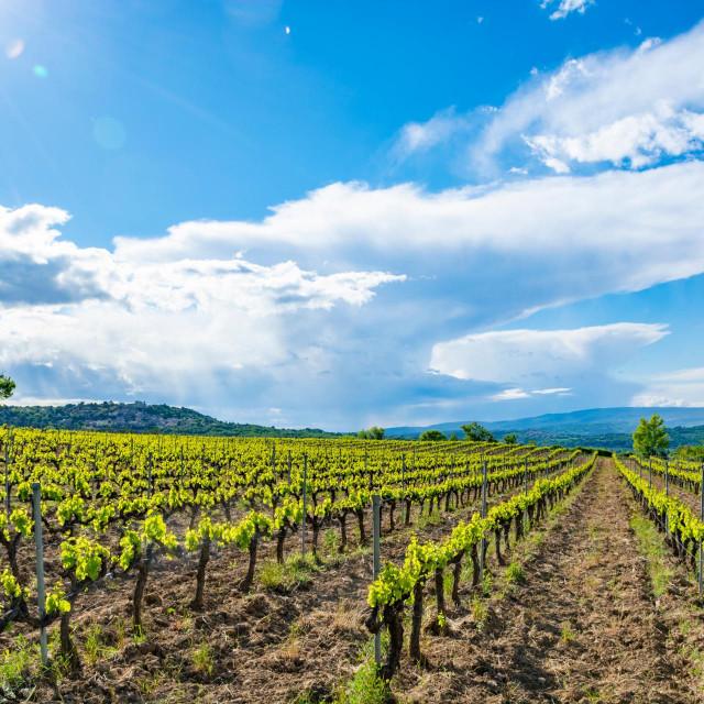 Zimsko tretiranje jezgričavih i koštičavih voćaka, vinove loze i maslina izvodi se u vrijeme mirovanja vegetacije