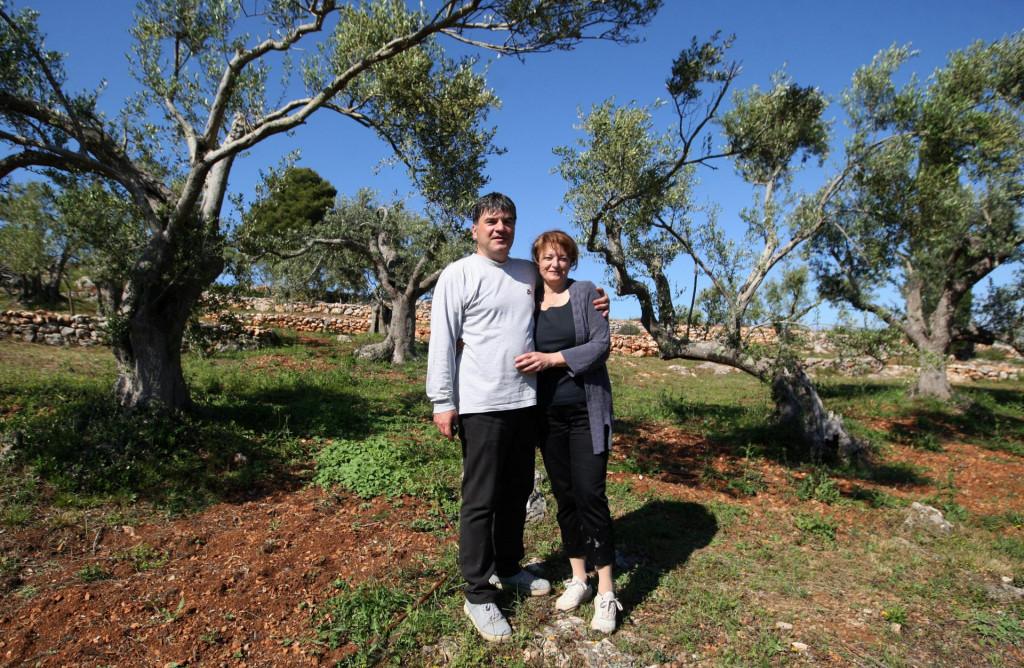U Žmanu na Dugom otoku, Goran Morović sa suprugom Sonjom obnavlja stare maslinike<br />