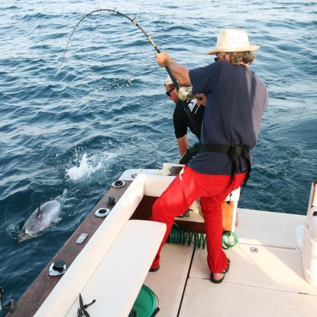 U tunolovu je zvuk brodskog motora okidač za hranjenje