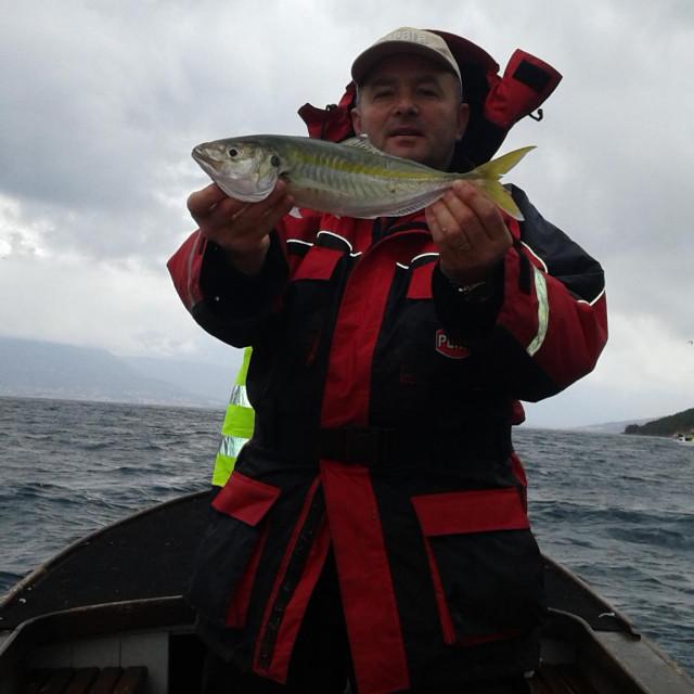Falšun se u sportskom ribolovu na našem moru najčešće lovi slučajno