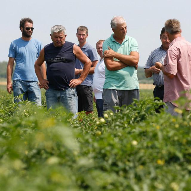 Panika vlada među proizvođačima, jer u Umagu je jedina tvornica za preradu rajčica u Hrvatskoj – upozorava Makovac